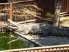 日本のアマゾン!?地味にジワジワ面白い「熱川バナナワニ園」