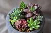 かわいい&お世話も簡単!多肉植物の魅力をチェック!